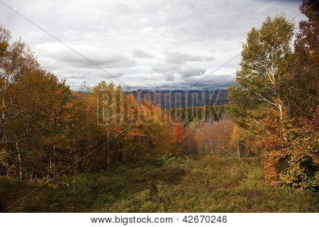 New Hampshire Foliage On Hillside