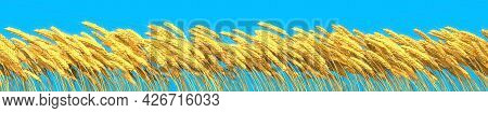 Rye Or Wheat On Blue Sky, Agricultural Crop Background Isolated, Cgi Industrial 3d Illustration