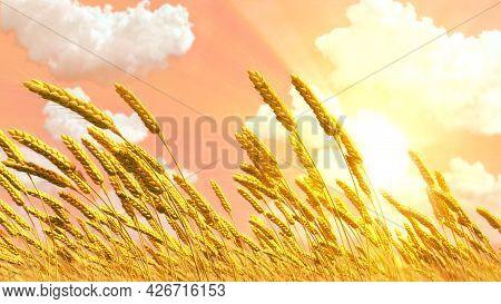 Ripe Rye Or Wheat Spikelets Field At Pretty Sundown Backdrop , Cgi Nature 3d Illustration