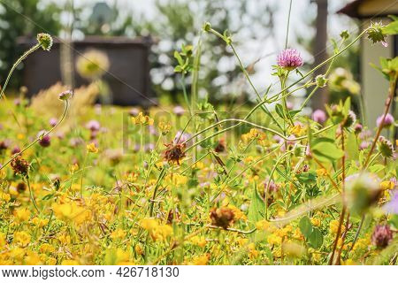 Farm Pasture, Summer Meadow Grass And Flowers In Sunny Day. Natural Landscape