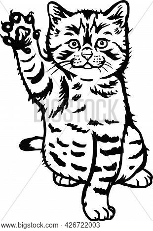 Cute Kitten - Funny Cat Isolated On White, Cute Kitty, Pets Lover, Pet Silhouette, Fluffy Kittens. P