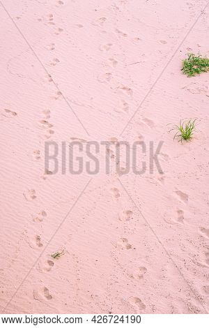 Pink Sand With Human Footprints At Noon On A Bright Sunny Day