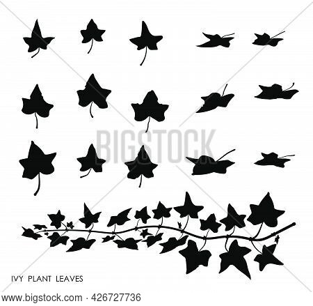 Black Thin Ivy Liana Grass Leaves Silhouettes Isolated On White. Climbing Thin Plant. Autumn Fallen