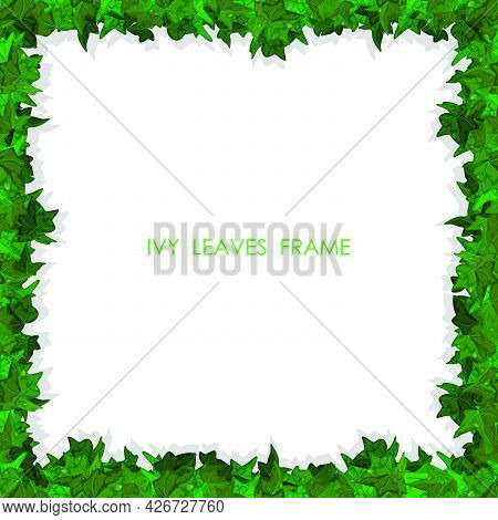 Decorative Square Frame Made Of Green Leaves Of Ivy Plant. Floral Plant Frame Made From Wandering Pl
