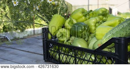 Vegetables In The Basket. Fresh Peppers, Cucumbers And Tomatoes In A Box On A Wooden Background. Har