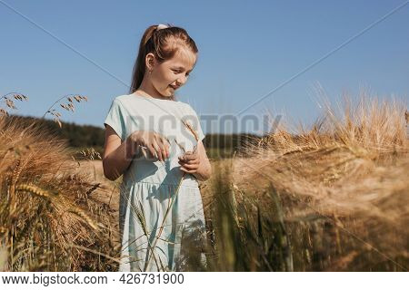 A Cute Fair-haired Girl Stands In A Field Of Golden Spikelets. Summer Holidays, Happiness And Freedo