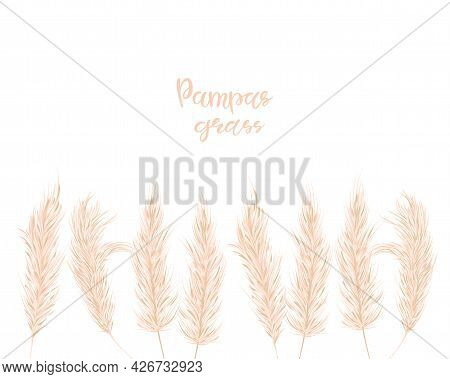 Dry Pampas Grass Set. Illustration In The Boho Style. Dried Plant For Decoration, Frame, Backdrop, F