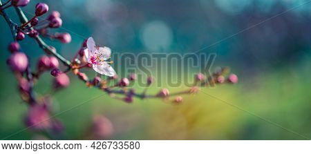 Spring Nature Blossom Background. Beautiful Nature Scene With Blooming Tree And Sun Flare With Artis