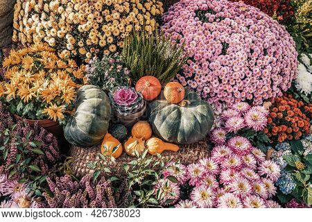 Pumpkins Of Different Varieties Among Flowers, Autumn Harvest. Thanksgiving Day And Halloween Concep