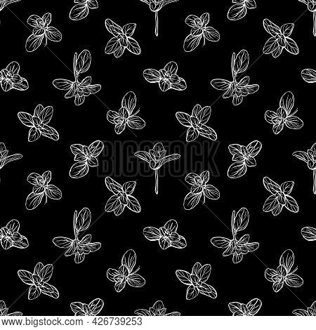 Seamless Pattern With Basil Leaves.i Vector Illustration .
