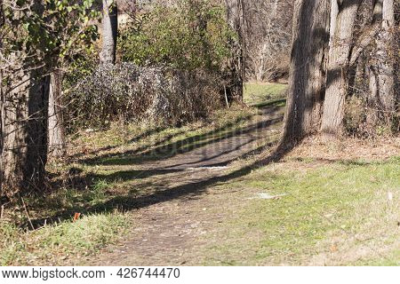 A Cros Country Race Course In The Woods Is Marked With White Arrows, On The Trail Through The Trees