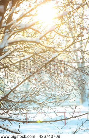 Winter Background With Snowy Tree Branches. Leaves And Snowflakes. Festive Christmas Card.