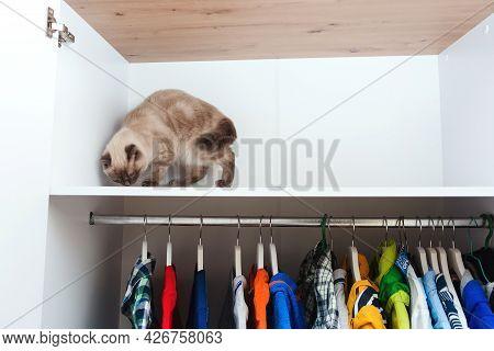 Cat In The Wardrobe. House Pet, Lifestyle. Wardrobe With Clothing. White Modern Closet Inside. Stora