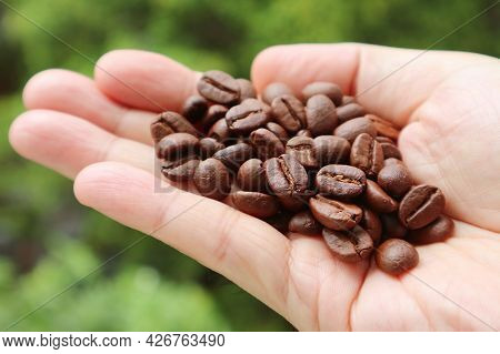 Closeup Heap Of Roasted Coffee Beans In Man's Hand