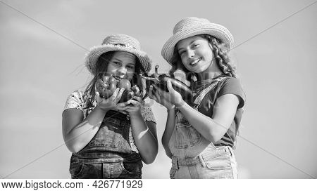 Selling Homegrown Food Concept. Girls Cute Children In Hats Farming. Kids Gathering Vegetables. Orga