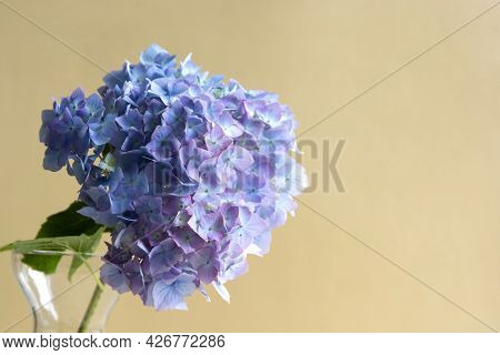 Blue Live Hydrangea Flowers In Glass Vase. Abstract Beautiful Blooming Flower Background