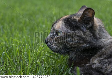 Close Up Image Of Cat Lie On Green Grass And Looking To The Side  With Expression Of Anger, Copy Spa