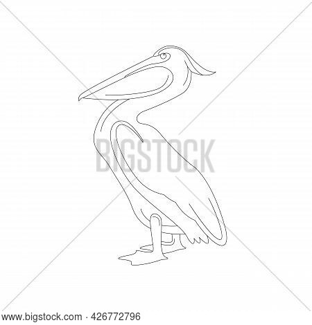 Pelican Vector Illustration,  Lining Draw  Side View