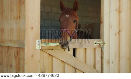 A Chestnut Horse Looking Out From The Window Of The Stall During The Daytime. View Of A Horse Stable