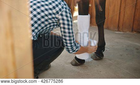 Female Caretaker Bandaging Horse Leg Outside The Stable During The Daytime. Seal Brown Injured Horse