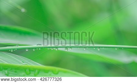 Leaf With Drops. Abstract Background. Fresh Summer Background. Abstract.