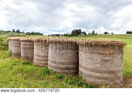 Haystacks On The Field. Hay For Animals. Pet Food Concept. Agriculture. Photo.