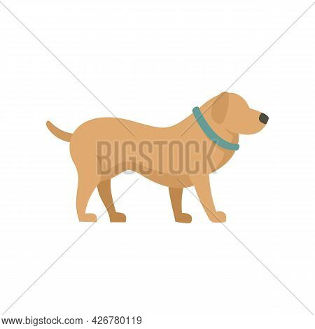 Home Dog Training Icon. Flat Illustration Of Home Dog Training Vector Icon Isolated On White Backgro