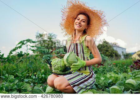 Young Happy Woman Gardener Picking Cabbage In Summer Garden Putting Vegetable Crop In Basket. Organi