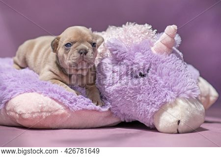 Small French Bulldog Dog Puppy Lying On Fluffy Violet Plush Unicorn
