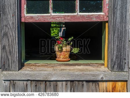 Geranium In A Terracotta Pot Sitting In An Open Window.