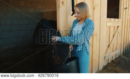 Young Girl Feeding A Seal Brown Horse In The Horse Stable. The Girl Is Holding A Bucket And Patting