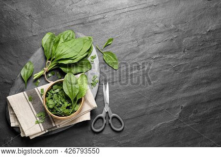 Broadleaf Plantain Leaves And Scissors On Black Slate Table, Flat Lay. Space For Text