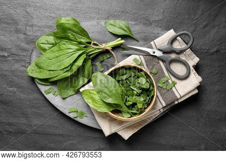 Broadleaf Plantain Leaves And Scissors On Black Slate Table, Top View