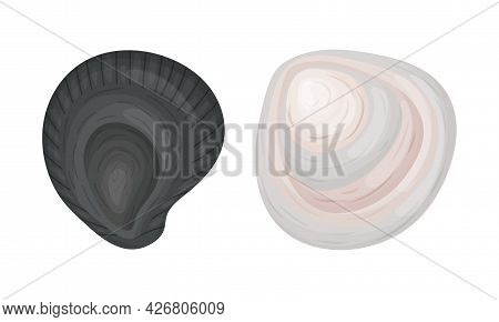 Oyster As Salt-water Bivalve Molluscs And Marine Delicacy Vector Set