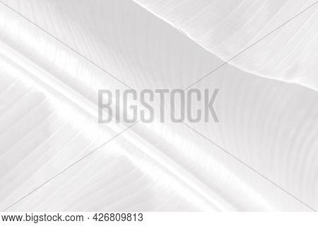 Gray banana leaf patterned background