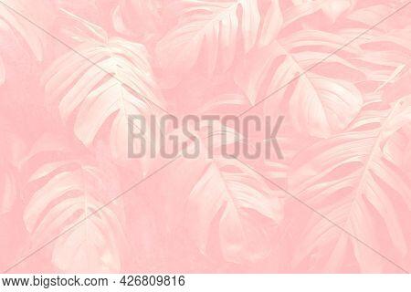 Crepe pink monstera leaf patterned background
