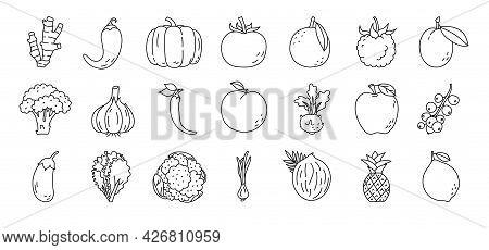Fruit And Vegetable Sketch. Ginger, Pepper, Raspberry And Prunes. Broccoli, Garlic, Kohlrabi And Egg