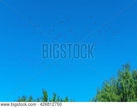 The Beautiful Picture Of The Blue Sky With The Flock Of The Flying Birds In The Spring Or Autumn.