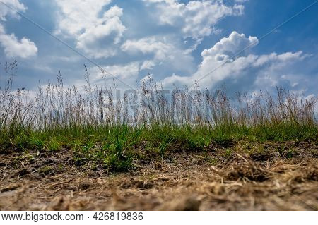 Wide Angle Photo From Low Point Of View, Of A Sandy Path With Grass And Reeds. An Impressive Blue Sk