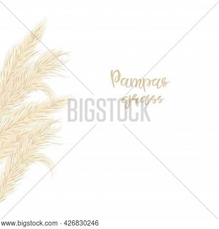 Pampas Grass Card Template Frame On The Left With Copy Space.floral Ornamental Grass. Vector Illustr
