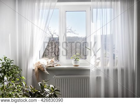 The Interior Of The Living Room In Light Colors. Window With White Tulle And Sleeping Cat On Windows