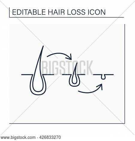 Hair Follicle Line Icon. Causes Of Hair Loss In Men And Woman. Miniaturized Hair Follicles, Stop Gro
