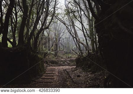 Footpah In Mysterious Foggy Forest. Anaga National Park In Tenerife, Spain.