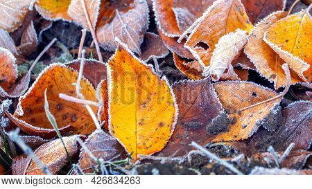 Frost-covered Fallen Autumn Leaves, The First Frosts, Autumn Background