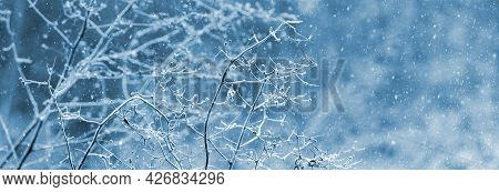 Blizzard In The Forest. Frost-covered Dry Branches Of Plants In The Forest On A Blurred Background D