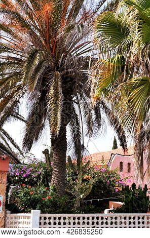 Beautiful Tropical Garden With Huge Palm Trees, Flowers And Lush Vegetation And A Pink House. Castil
