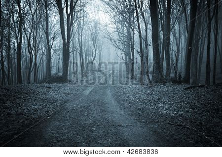 Road trough a dark blue forest with fog