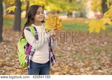 Perfect Autumn Day Of Cheerful Girl With School Bag Gathering Maple Leaves In Fall Season Park In Go