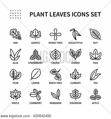 Leaves Of Different Plants Vector Linear Icon Set. Plant Leaf View. Isolated Icon Collection Of Leav