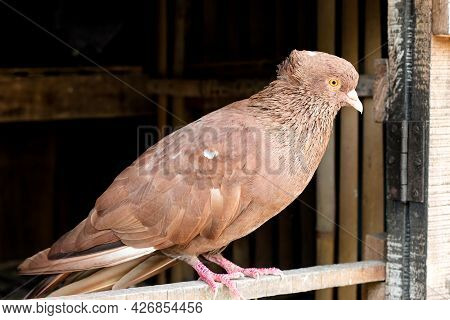 A Pigeon Standing On The Door Of A Loft Close Up